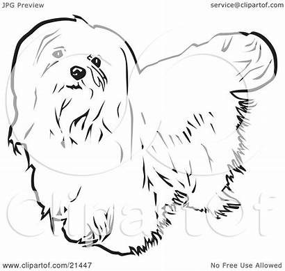 Maltese Dog Clipart Haired Looking Background Illustration