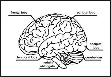 chsh teach brain nervous system neuroscience teaching
