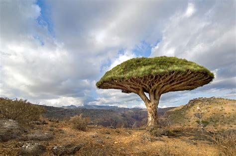 """10 alberi """"alieni"""" che crescono sulla Terra - Focus.it"""