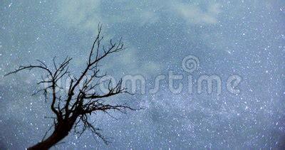 Night Sky Tree Silhouette Timelapse Stock Footage