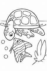 Coloring Fish Pages Sea Boys sketch template