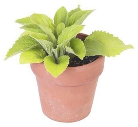 gnats in houseplants how to get rid of gnats in soil