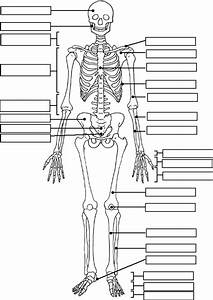 Skeleton Label Worksheet With Answer Key