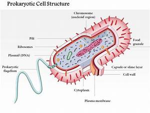 0614 Prokaryotic Cell Structure Medical Images For