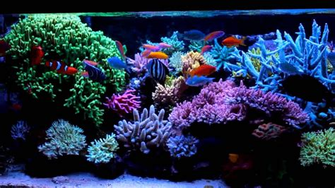 saltwater aquariums beauty and luxury with saltwater fish aquarium aquarium design ideas