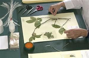 Schleimpilze Im Garten : botanische staatssammlung m nchen volunteering ~ Lizthompson.info Haus und Dekorationen