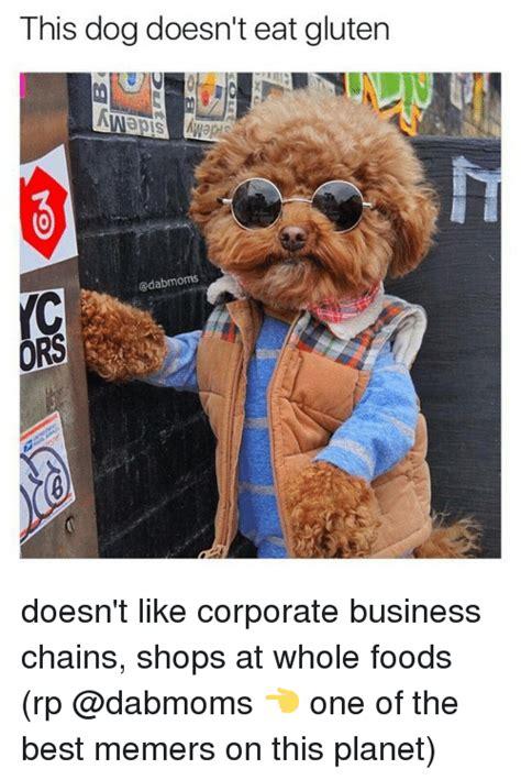T Dog Meme - business dog memes www pixshark com images galleries with a bite