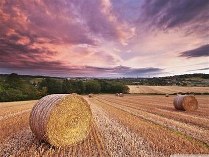 Harvest Magical 4k Wallpapers Wallpaperswide Ultra Standard