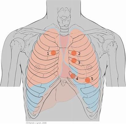 Landmarks Cardiac Heart Anterior Area Point Aortic