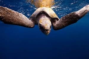 Photographer jorge cervera hauser captures sea creatures for Jorge cervera hauser sea creature photography