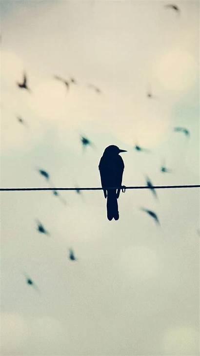 Phone Funny Wire Crows Fondo Cuerda Pajaros