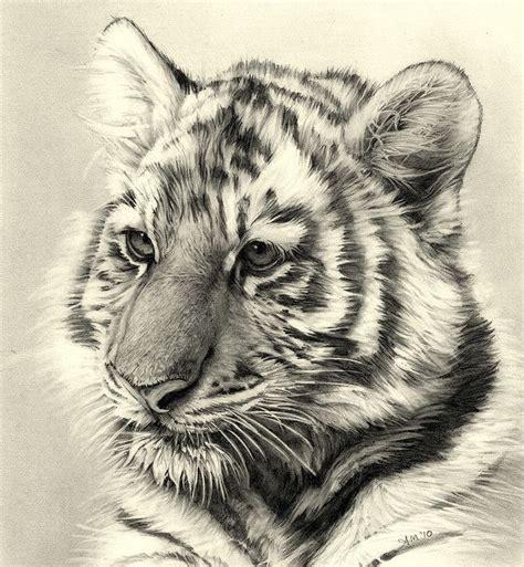tiger cub pencil drawing   cool art pencil