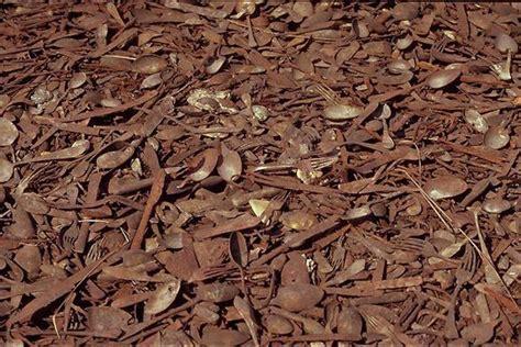 chambre a gaz auschwitz birkenau canada