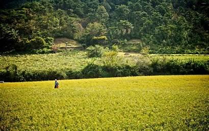 Rice Field Korea Korean Nature Japan Wallpapers