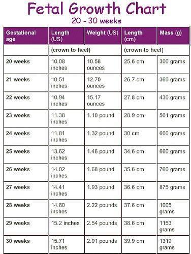 Janin 27 Minggu Fetal Growth Chart 20 30 Weeks Baby Stuff Pinterest