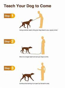 Embedded image diy pinterest training your dog sons for How to puppy train your dog