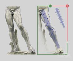 Read this article for an overview of all the leg muscles. Anatomy Difference Between Male And Female Human Skeleton ...