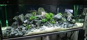 Aquarium Deko Steine : fish tank with basalt stones aquariums vivariums paludariums teratiums ripariums ~ Frokenaadalensverden.com Haus und Dekorationen