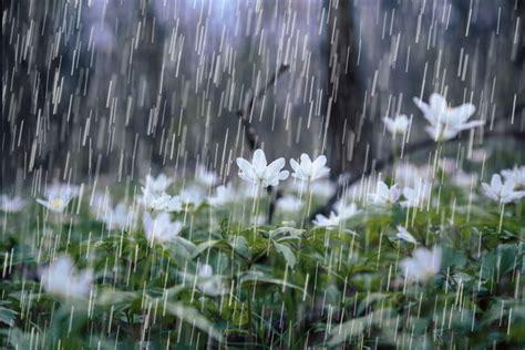 Rain Showers Spring Flowers