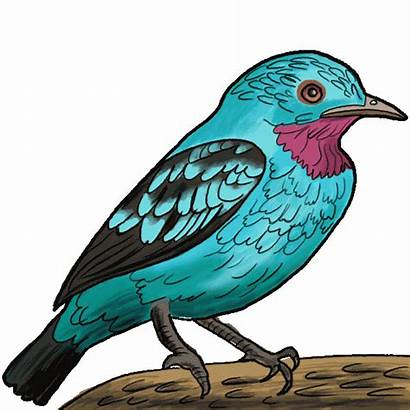 Drawing Birds Draw Bird Instructions Nice Clipartmag