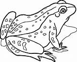 Frog Coloring Animals Realistic Printable Waiting Nature Wecoloringpage Colouring Luxury Kid Mcstuffins Doc Unique Volume Sheets Dog Animal Mexico Games sketch template