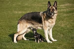 Partner Hund Abo Kündigen : schnelles wachstum kurzes leben partner hund magazin ~ Lizthompson.info Haus und Dekorationen