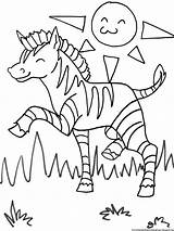 Coloring Zebra Pages Zoo Printable sketch template