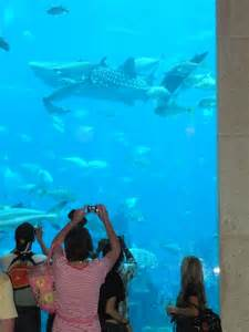 aquarium hotel in dubai dubai part2 atlantis the palm moco choco