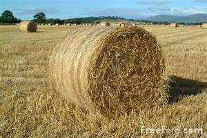 Bales of Hay pictures, free use image, 07-11-8 by FreeFoto com