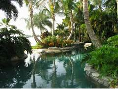 Landscape Architects Landscape Designers Backyard Landscaping Ideas Swimming Pool Design Homesthetics Ideas For Backyard Brick Wall And Tropical Plants For Elegant Backyard Best Tropical Landscape Design Ideas Remodel Pictures Houzz