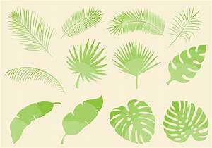 Tropical Leaf Vectors - Download Free Vector Art, Stock ...