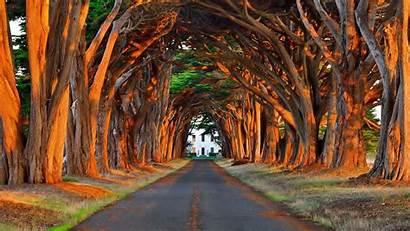 Trees Fantastic Tree Desktop Driveway Lined