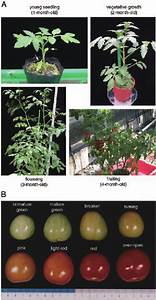 Different Developmental Stages In Plants And Fruits Of