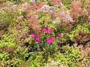 Extensive Dachbegrünung Pflanzen : greenbox dachbegr nung gr ndach dachgarten ~ Frokenaadalensverden.com Haus und Dekorationen