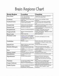 Brain Functions Chart