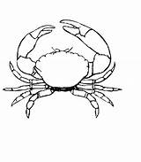 Crab Coloring Pages Drawing Stone Printable Outline Crabs Simple Colouring Animals Template Animal Drawings Fun Fish Sketch Sea Animalplace Print sketch template