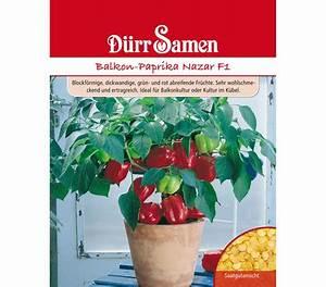 Paprika Pflanzen Pflege : d rr samen balkon paprika 39 nazar f1 39 dehner garten center ~ Markanthonyermac.com Haus und Dekorationen