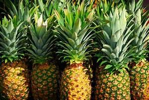 Wann Erntet Man Knoblauch : ananas vermehren mango ganz einfach vermehren 79 best ~ Lizthompson.info Haus und Dekorationen