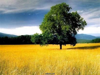 Nature Cool Wallpapers Colorful Background Xcitefun Desktop