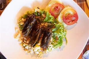 Kakerlaken ähnliche Insekten : kakerlaken als lebensmittel ~ Articles-book.com Haus und Dekorationen