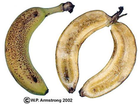 do bananas seeds does a banana have seeds yahoo answers