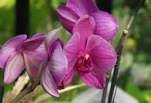 Comment Tailler Les Orchidées Pour Qu Elles Refleurissent : astuce pour faire de l 39 engrais pour orchid e grands ~ Melissatoandfro.com Idées de Décoration
