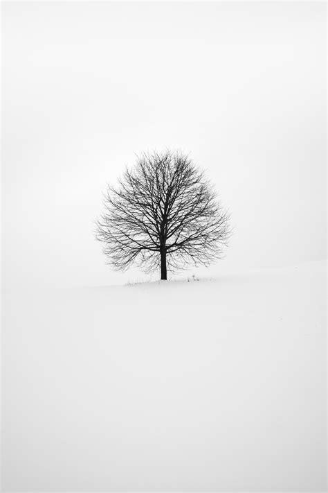super minimal    minimal black  white