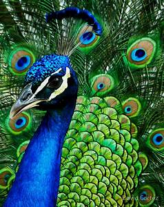 {Hue-ology} - Your Weekly Color Inspiration - Peacock Blue