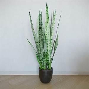 Zimmerpflanzen Für Schatten : zimmerpflanzen f r dunkle r ume ~ Michelbontemps.com Haus und Dekorationen