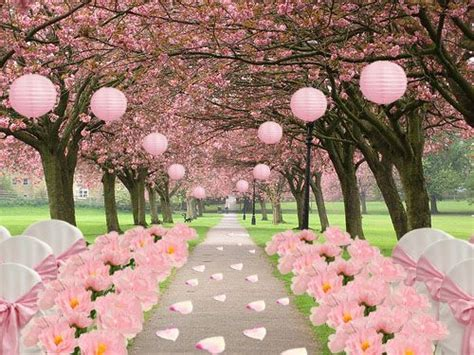 Salute the Spring with a Cherry Blossom Wedding