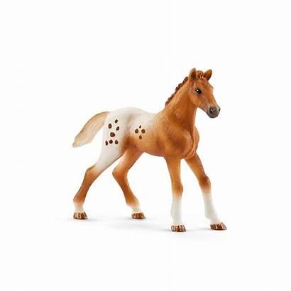 Entrainement Concours Horse Kit Schleich Suivant Chevaux