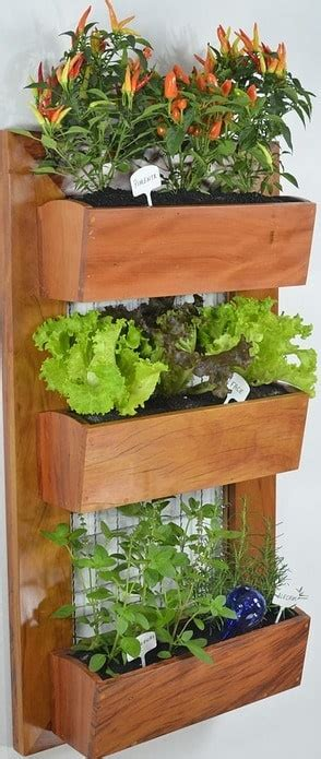Vertical Gardening Techniques by Vertical Gardening Ideas Techniques Methods Agri Farming