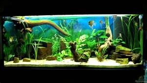 Tiere Für Aquarium : aquarium dekoration aquarium einrichtungsbeispiele ~ Lizthompson.info Haus und Dekorationen