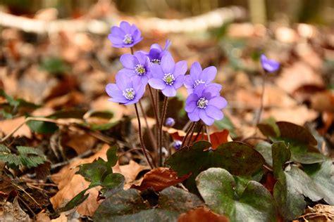 ilmaisia kuvia luonto kukka maa puun lehti teraelehti